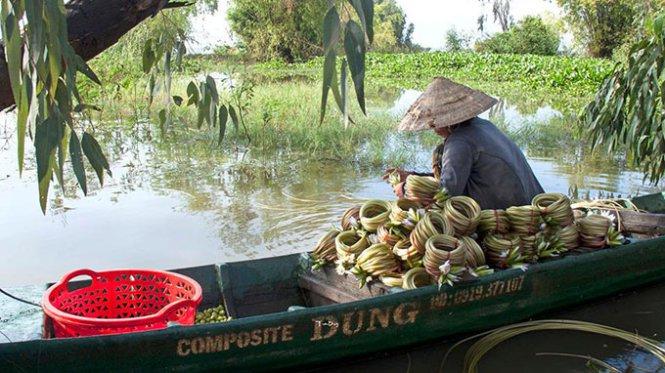 La  saison des fleurs de nénuphar extatiques au delta du Mekong – Vietnam