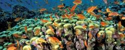 récif corallien en asie pour faire de la plongée