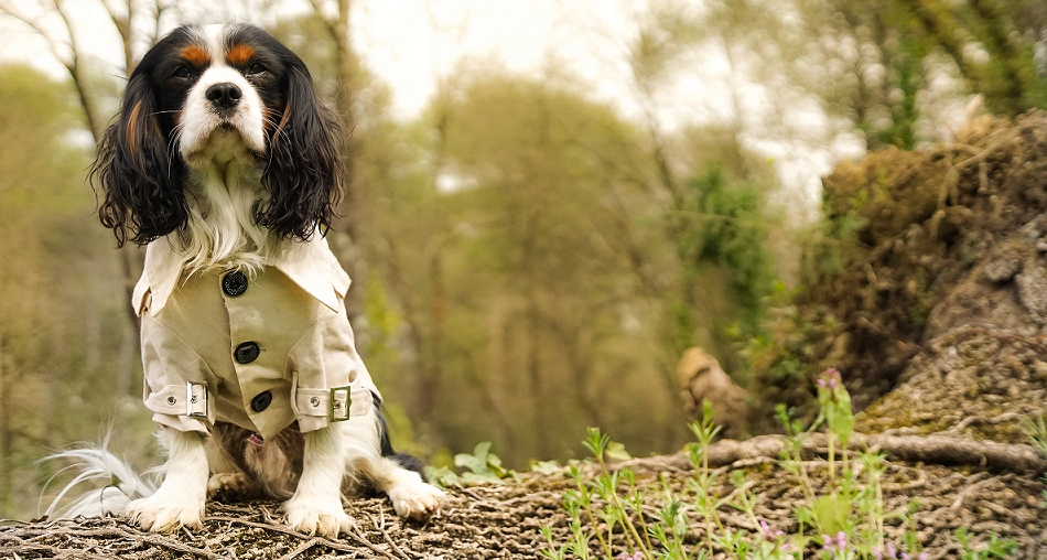 Choisir un manteau pour chien