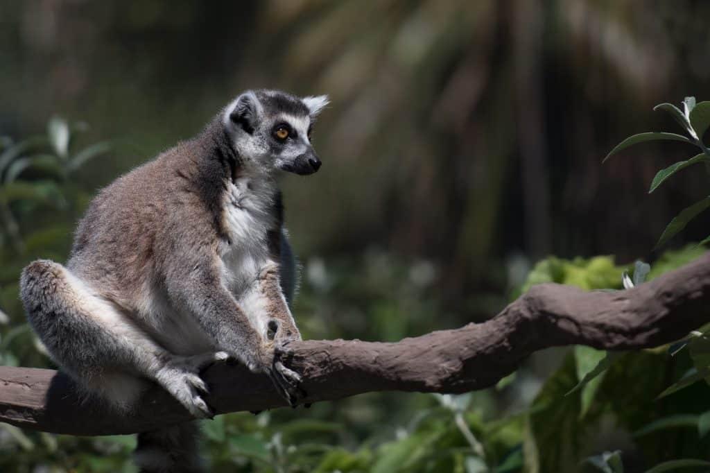 5 raisons de pratiquer le tourisme à Madagascar