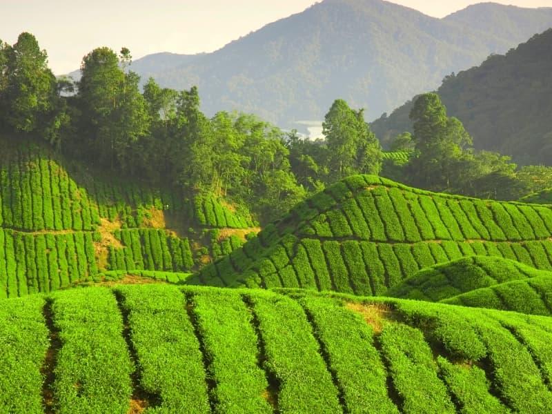 Un petit aperçu des attraits touristiques de Malaisie