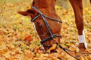 cheval au pré avec bridon