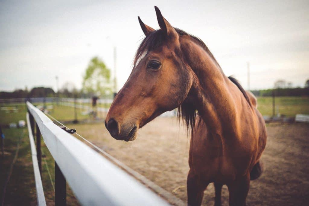 cheval en repos au manège