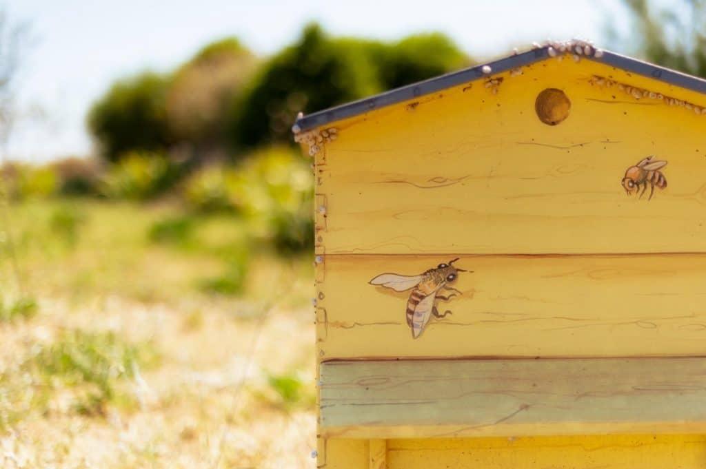 Trouver des ruches pour se lancer dans l'apiculture