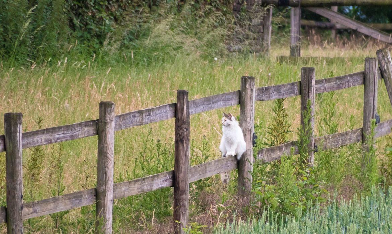Installer une clôture permet d'éviter certains désagréments