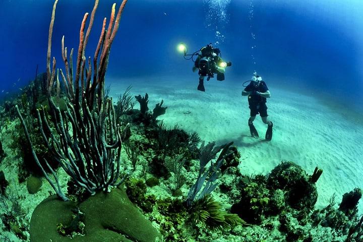 Partir pour un séjour de plongée en Guadeloupe
