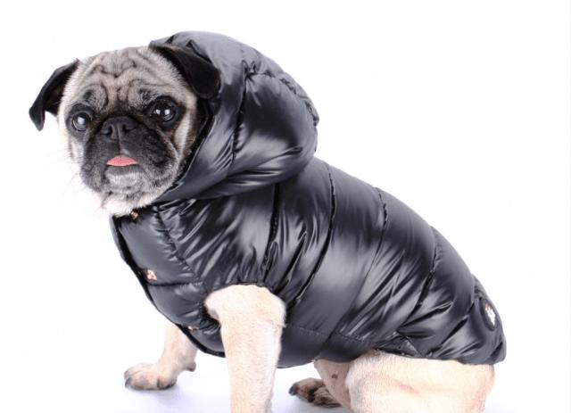Les doudounes pour chien : accessoire de luxe ou équipement indispensable ?