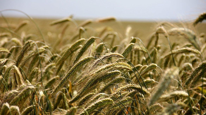 Faire avancer l'agriculture aujourd'hui