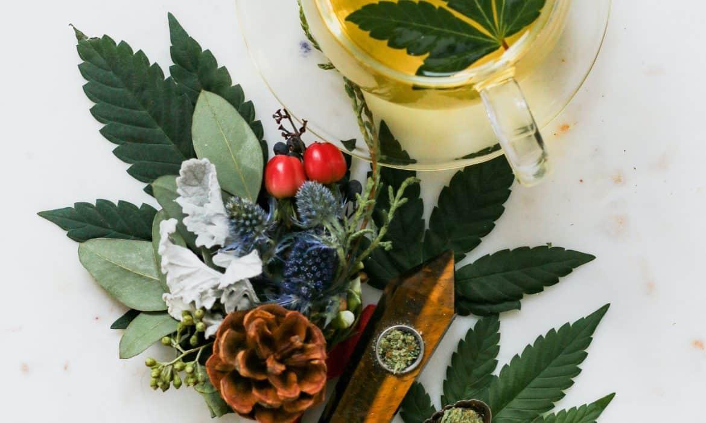Fleurs de CBD : 4 façons surprenantes de les utiliser (sans les fumer)