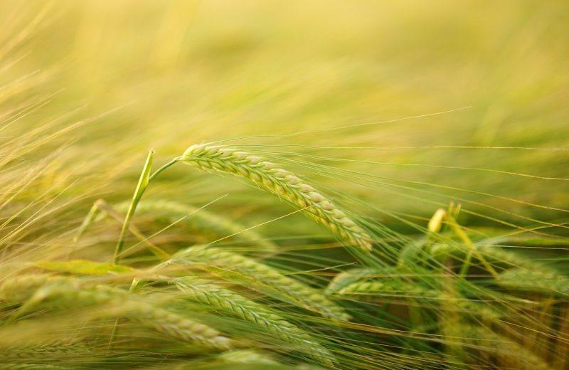 EARL : l'exploitation agricole à responsabilité limitée