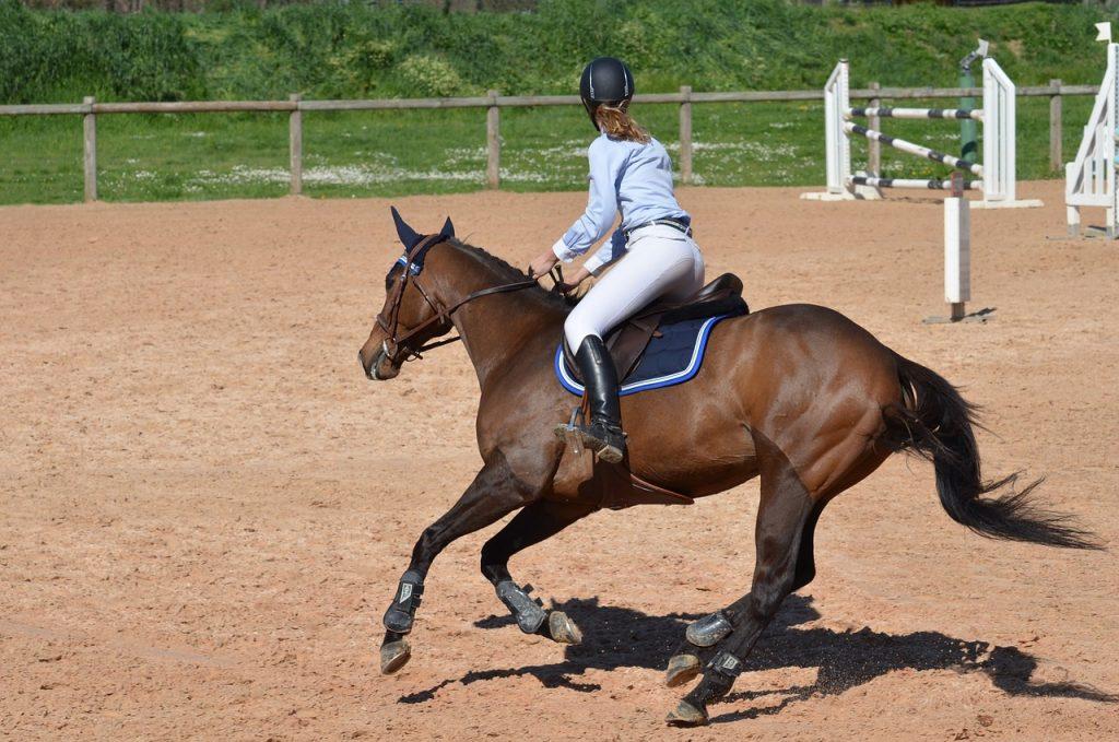 Choisissez la bonne sangle bavette pour le bien-être de votre cheval