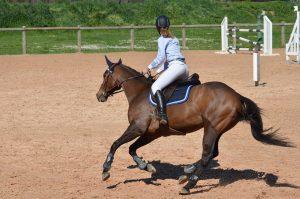 sangle bavette pour concours equitation
