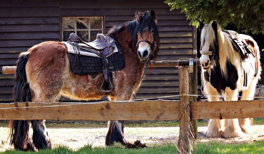 Selle cheval : composante et histoire d'un objet unique en son genre !