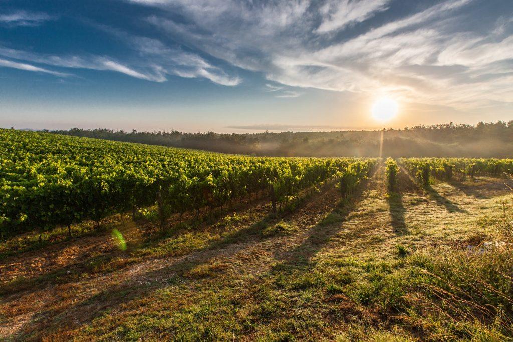 Vin sulfites très raisonnés : les origines inconnues